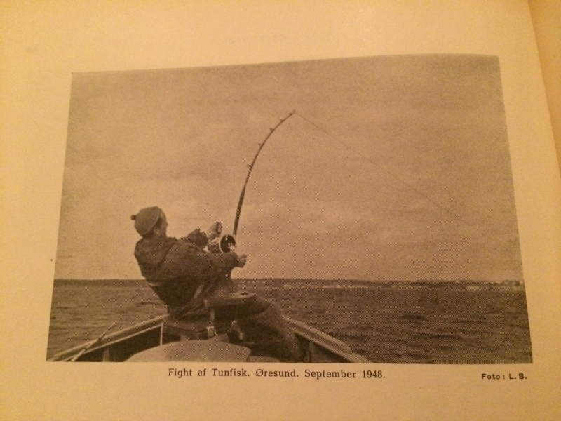 Fight of tuna from september 1948. Weird to consider that the Danish seas were full of these fish so recent.