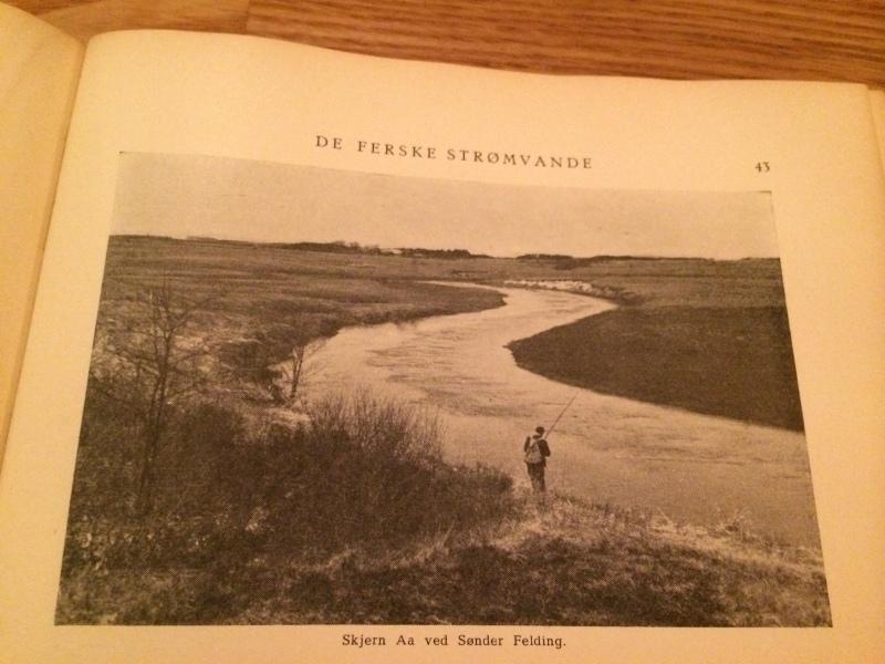 Legendary Danish salmon stream Sønder Felding.