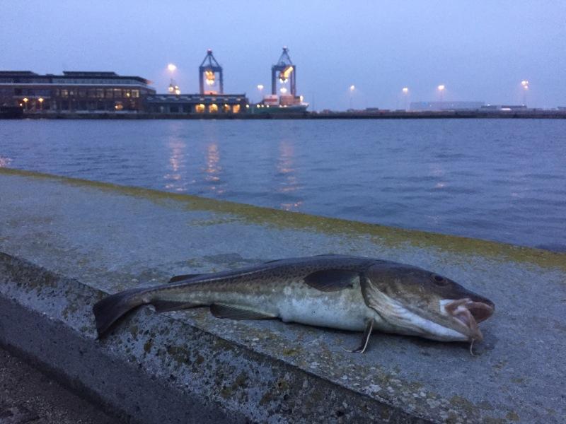 Urban fishing cod - Copenhagen