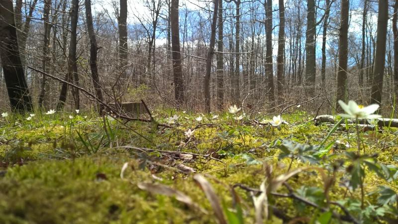 Gotta love dat spring feeling