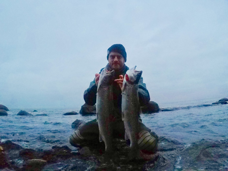 Seatrout falster