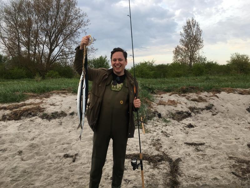 Gar fish - hornfisk dragør